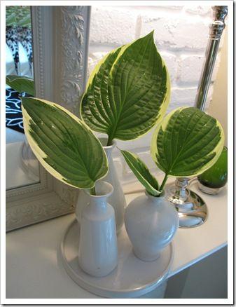 Hosta leaves in vases.