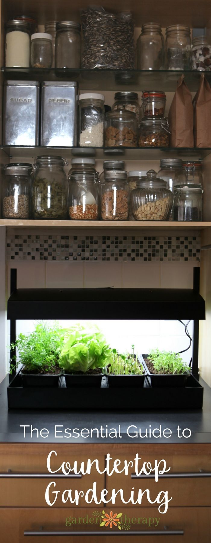 Countertop Gardening for Every Kitchen Growing food