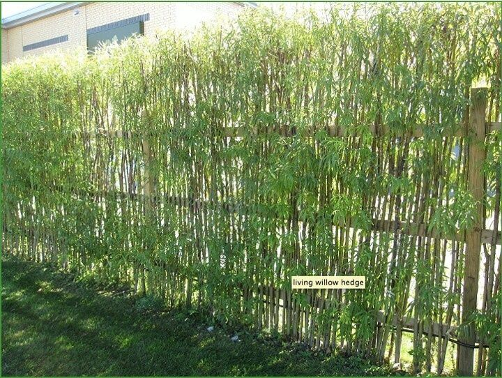 Living Hedge Fence Living Willow Hedge Garden Fences Walls Gates Living Willow Fence Natural Fence Willow Fence