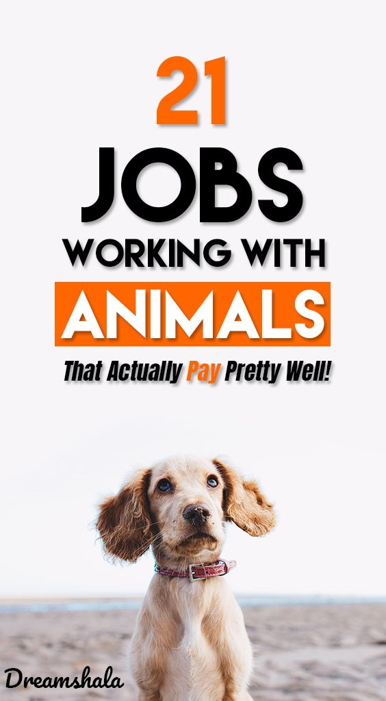 21 Coolest Jobs Working With Animals (Jobs List for 2020