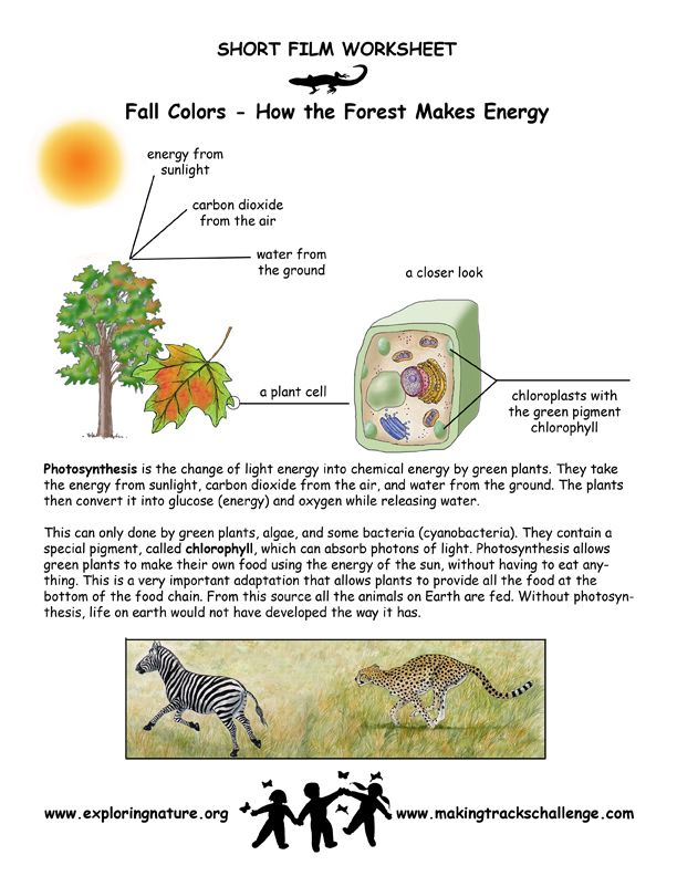 Photosynthesis diagram 7 grade science search for wiring diagrams fall colors http www makingtrackschallenge com movie detail php rh pinterest com cellular respiration diagram photosynthesis concept map ccuart Images