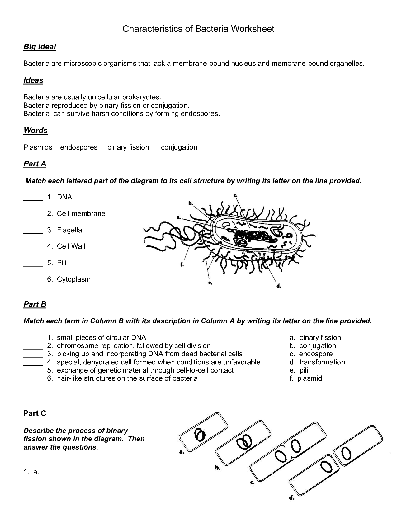 Virus And Bacteria Worksheet Answers