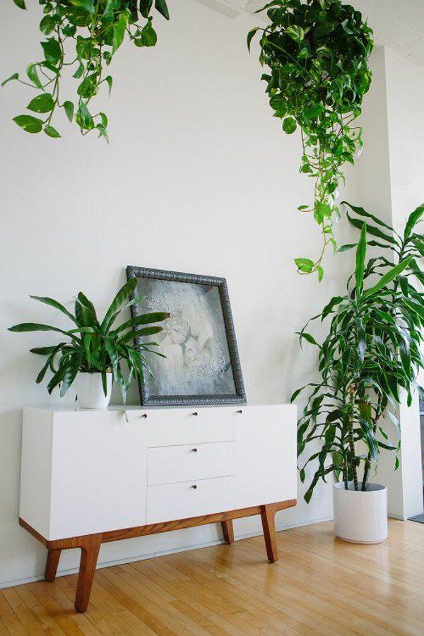 wohnzimmer wohnideen pflegeleichte zimmerpflanzen Zimmerpflanzen - wohnideen von feng shui
