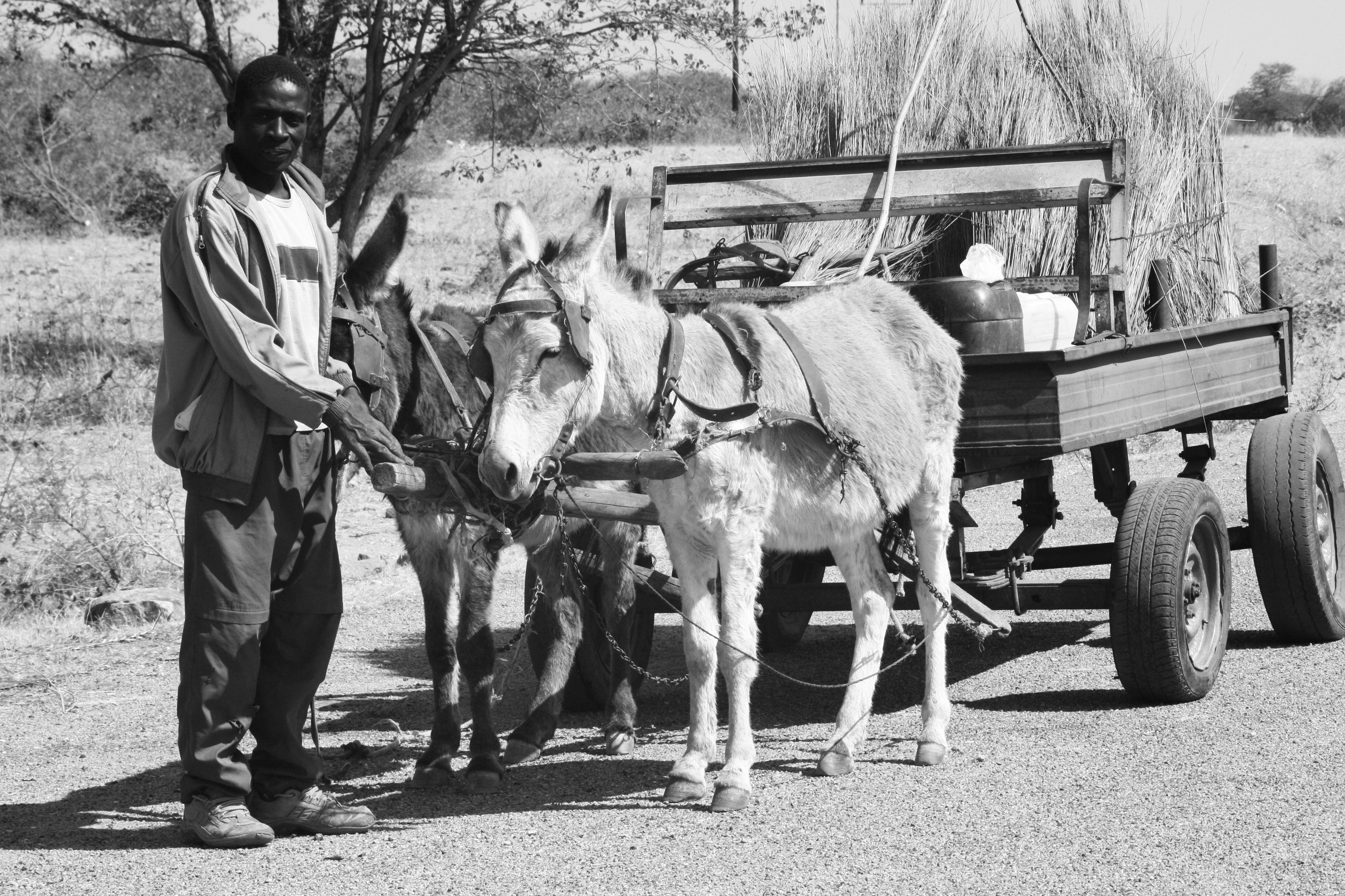 Donkey cart, Tuli Block, Botswana