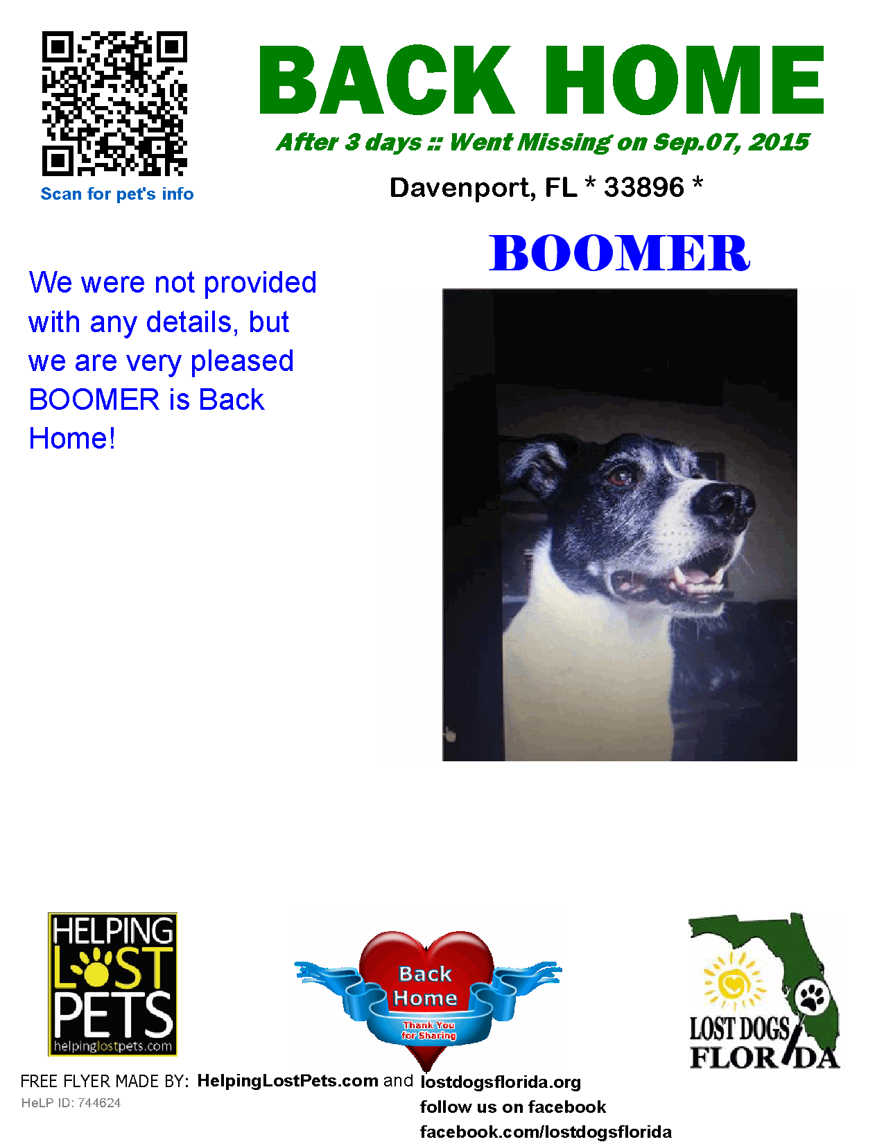 Helping Lost Pets Dog Border Collie Back Home Losing A Dog
