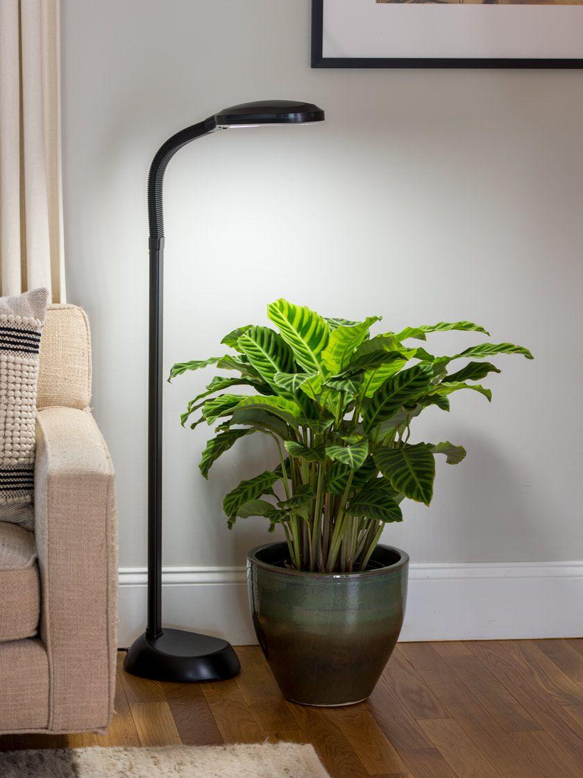 Floor Plant Lamp Full Spectrum Led Grow Light Floor 400 x 300