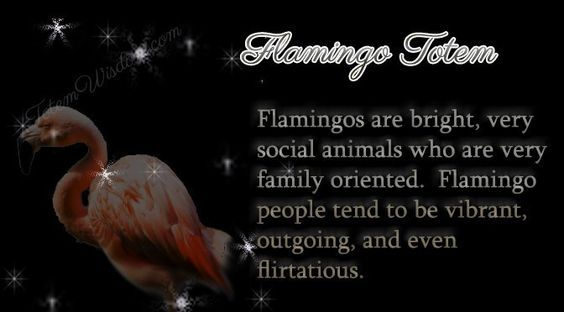 Flamingo Totem Symbolism Flamingo Things Pinterest Flamingo