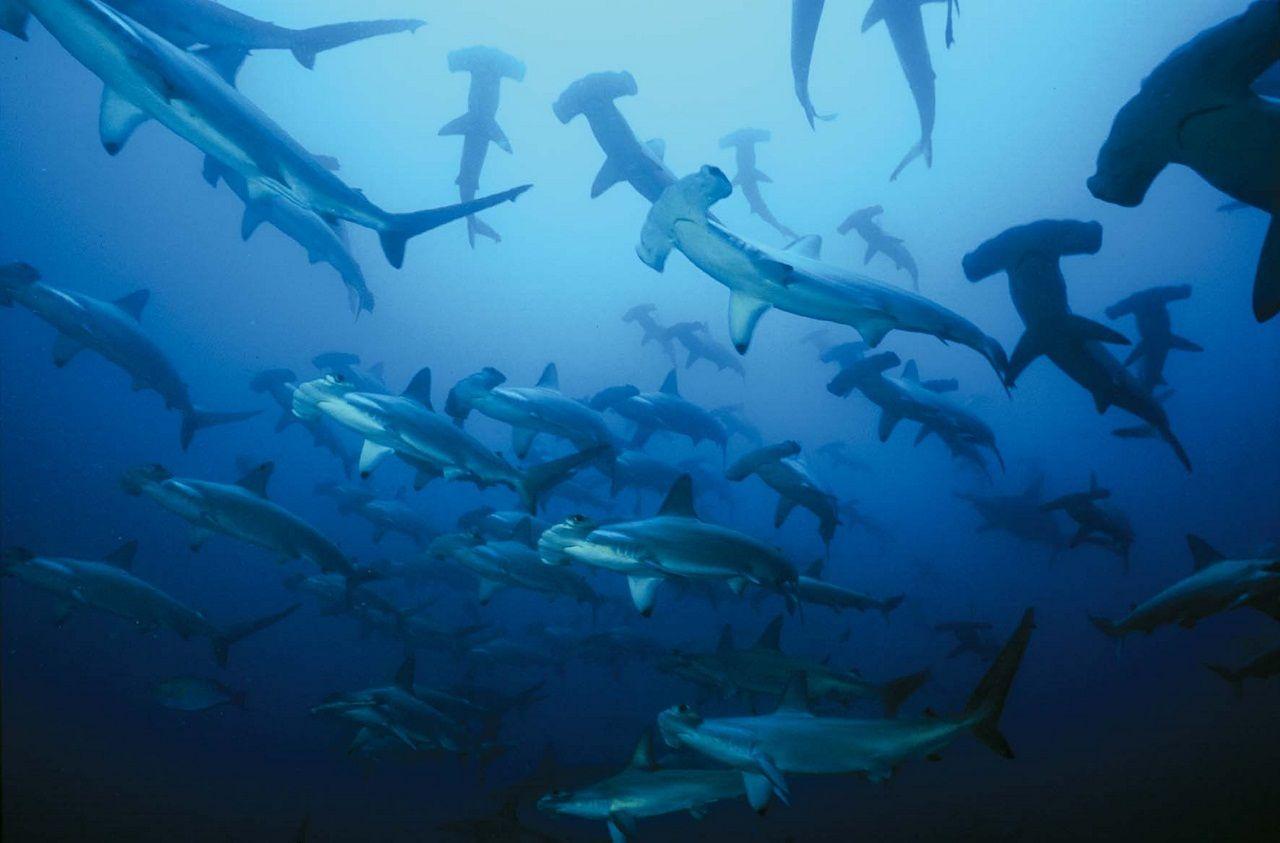 сша новую фото много акул предплечье