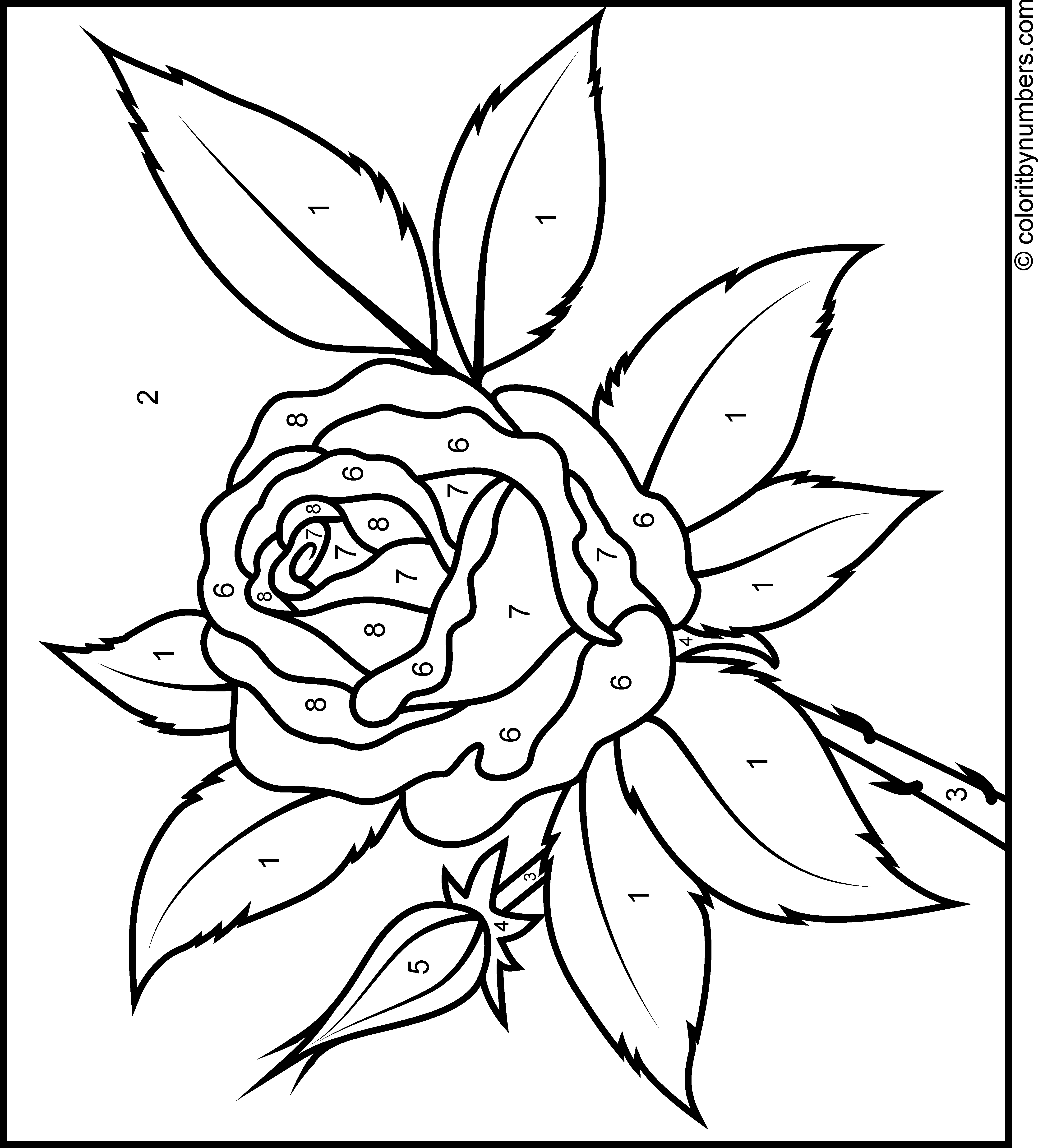 Rose Landscape Rose coloring pages, Coloring pages