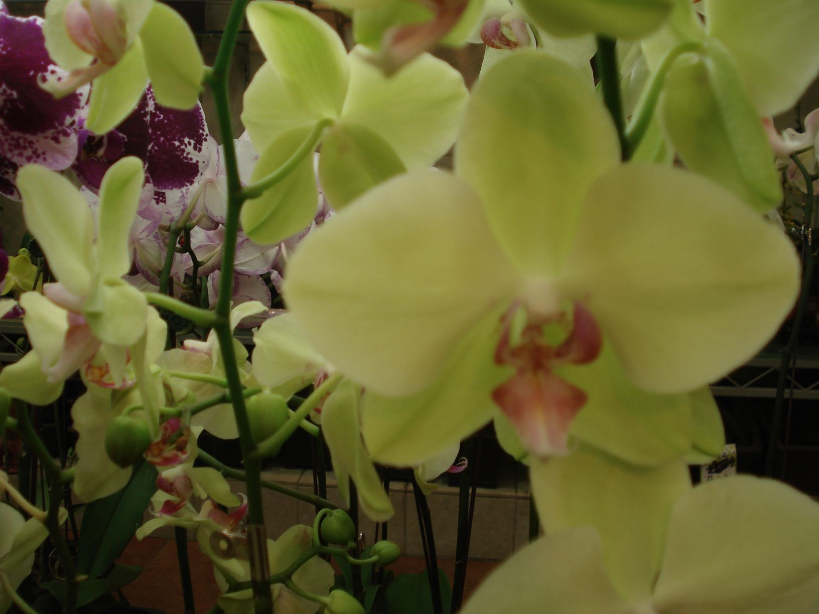 Yellow orchids spring acid yellow pinterest yellow orchid