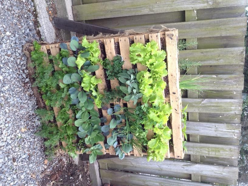 Small space vegetable garden (With images)   Lawn and ...