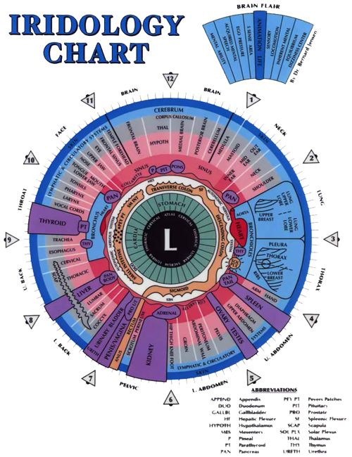 Iridology chart for the iris of the left eye defines the many