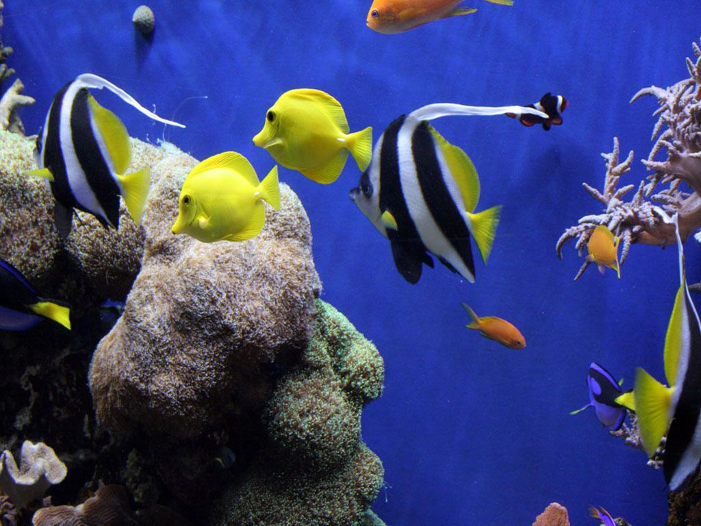 Underwater Aquarium Aquarium Ocean Life X Deluxe Wallpaper Ocean - Beautiful photography reveals underwater complexity aquariums