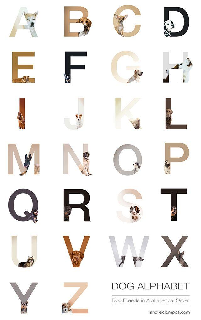El alfabeto perruno | Tipografía | Pinterest | Tipografía, Perruno y ...