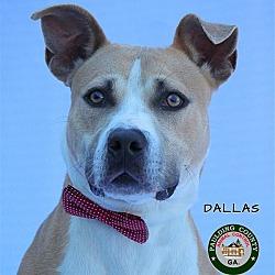 Paulding County Animal Control in Dallas, Animal