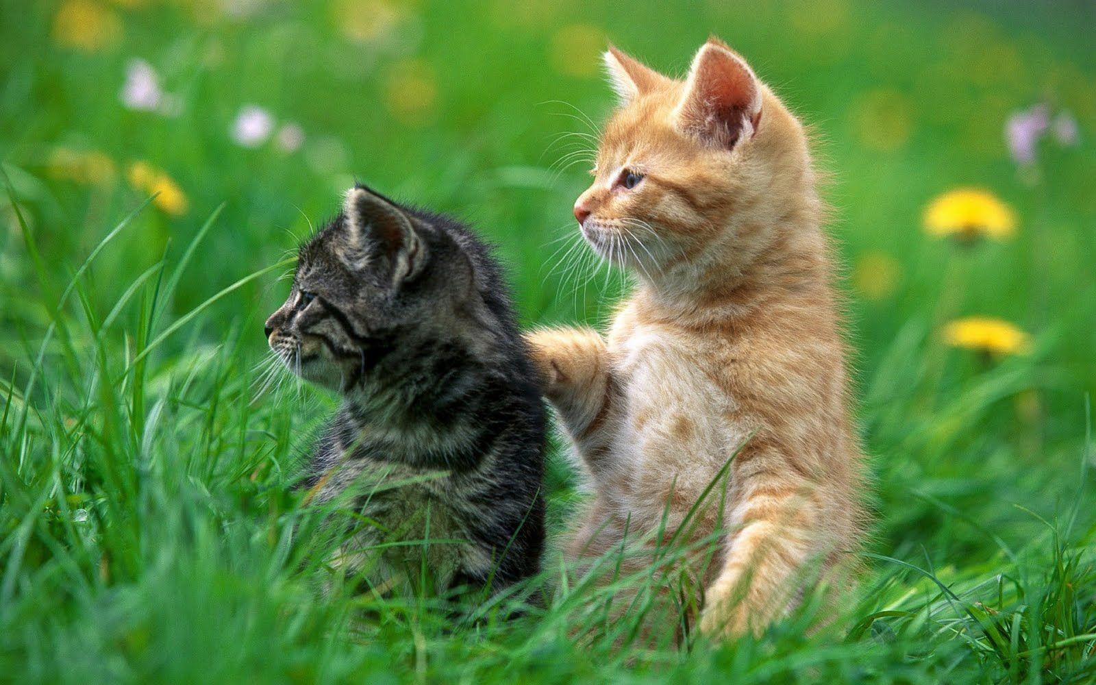 Beautiful Pets Wallpapers 1920x1200 Pixhome Funny Cat Photos