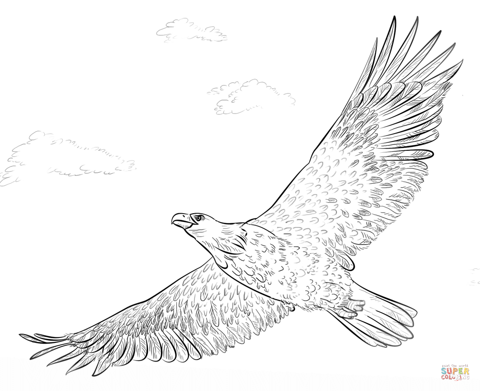 Bald Eagle in Flight Eagle in flight Coloring pages