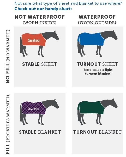 Diffe Types Of Rugs For Horses