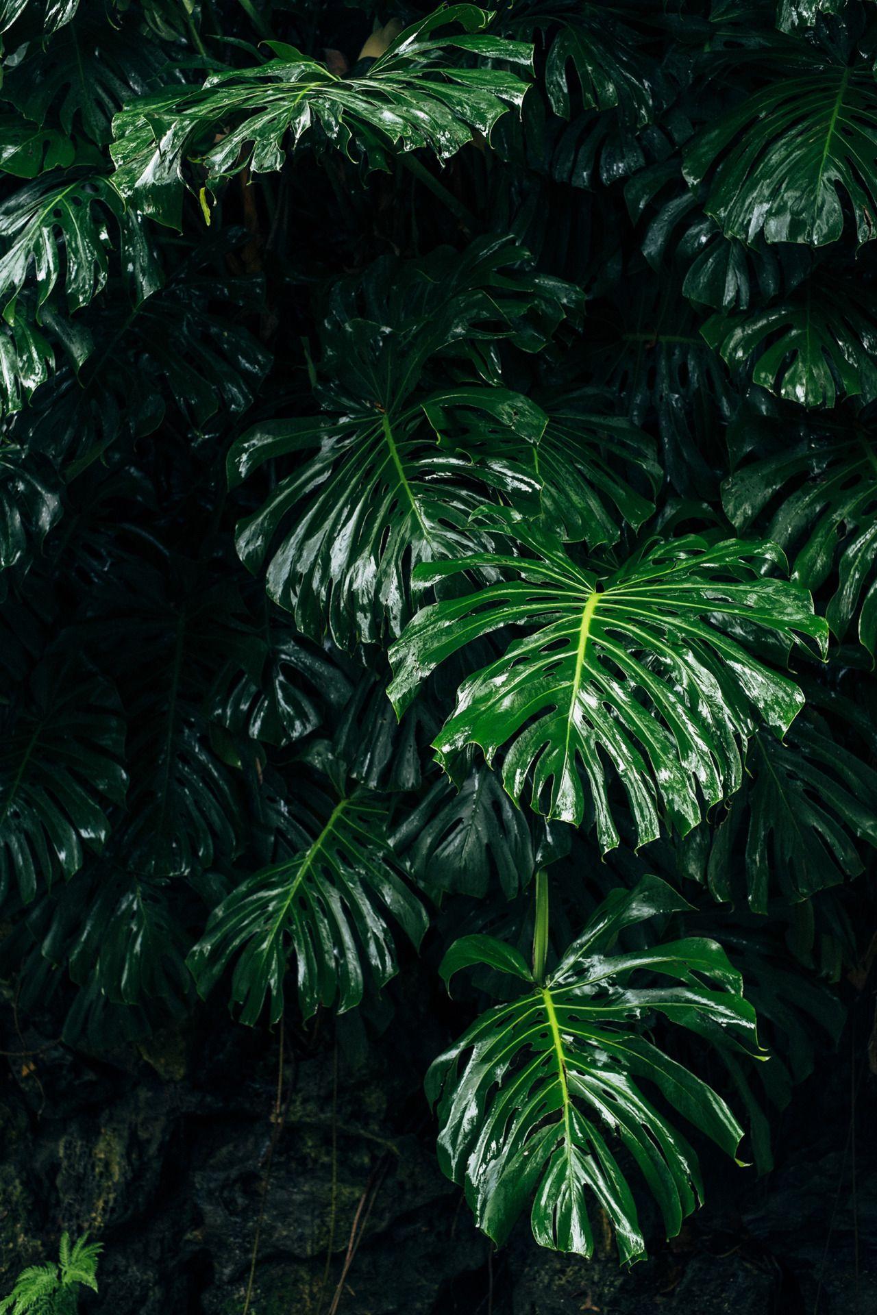 max zielinski | Wallpaper in 2019 | Green Plants, Plants ...