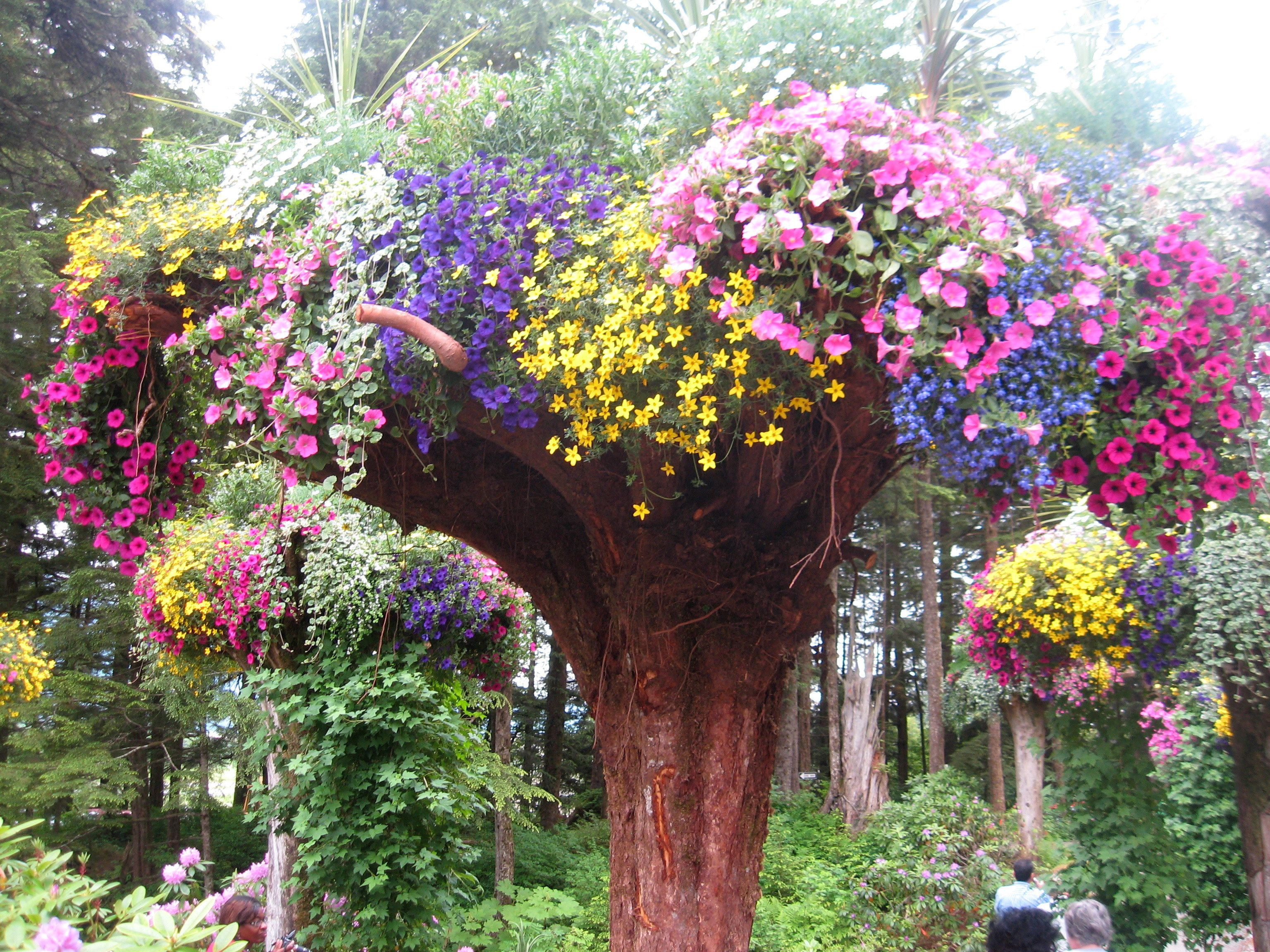 upside down trees with flowers planted in the roots. kim..dead