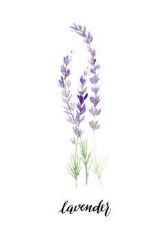 Image Result For Watercolor Lavender Wasserfarbenblumen