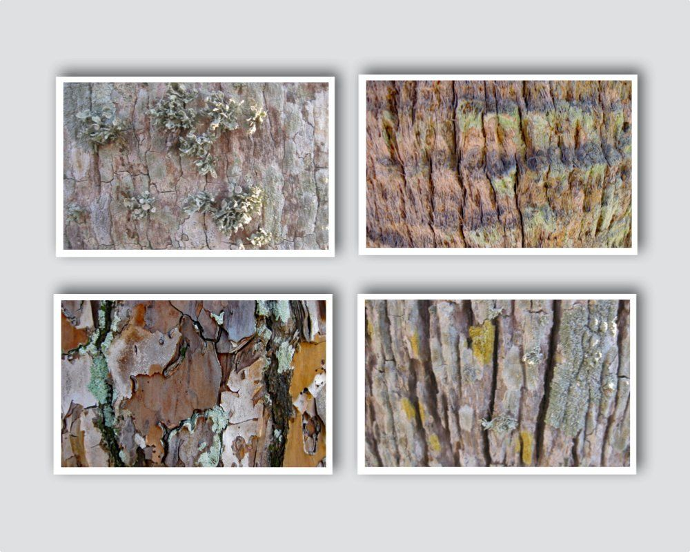 Tree Bark Prints Wall Decor Set Of Four Handmade 25 Off Included In Price 8 1 2 X 11 Inches Size Easy To Diy Frame Rich Detail Wall Prints Diy Frame Rustic Wall Art