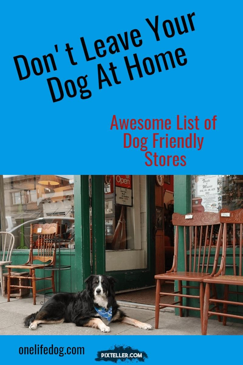 Take your dog shopping with you  Check out this awesome list