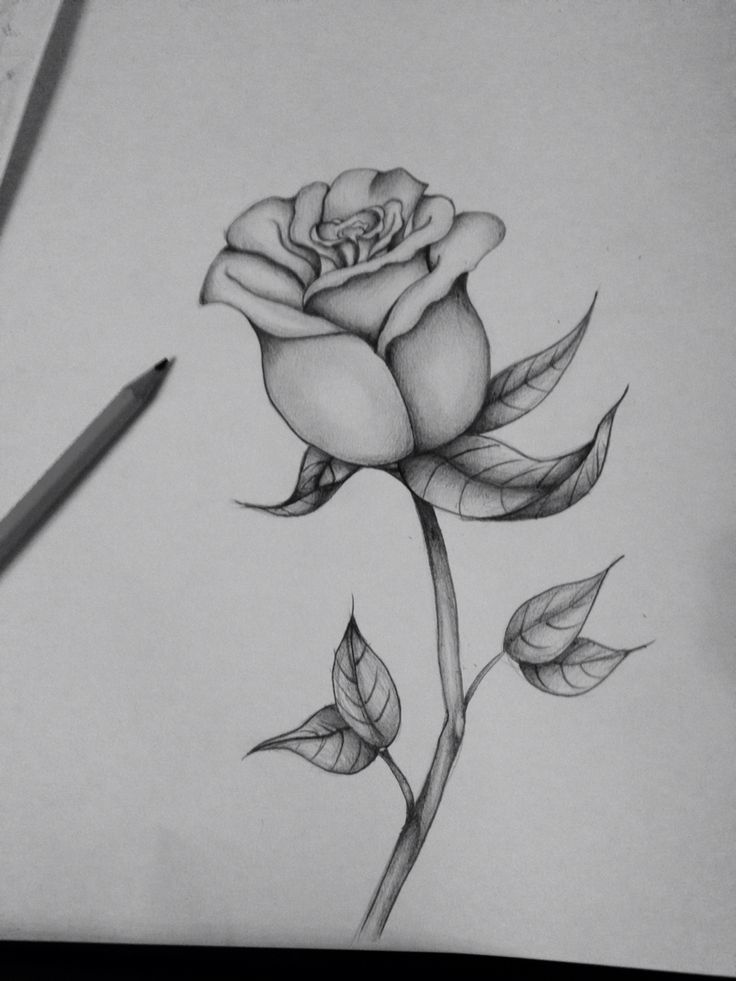 First attempt at a black and grey rose
