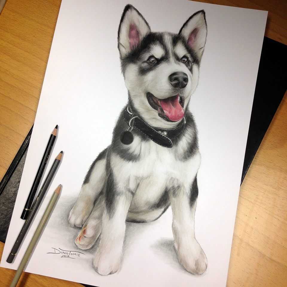 Puppy Pencil Drawing In 2019 Pencil Drawings Colored