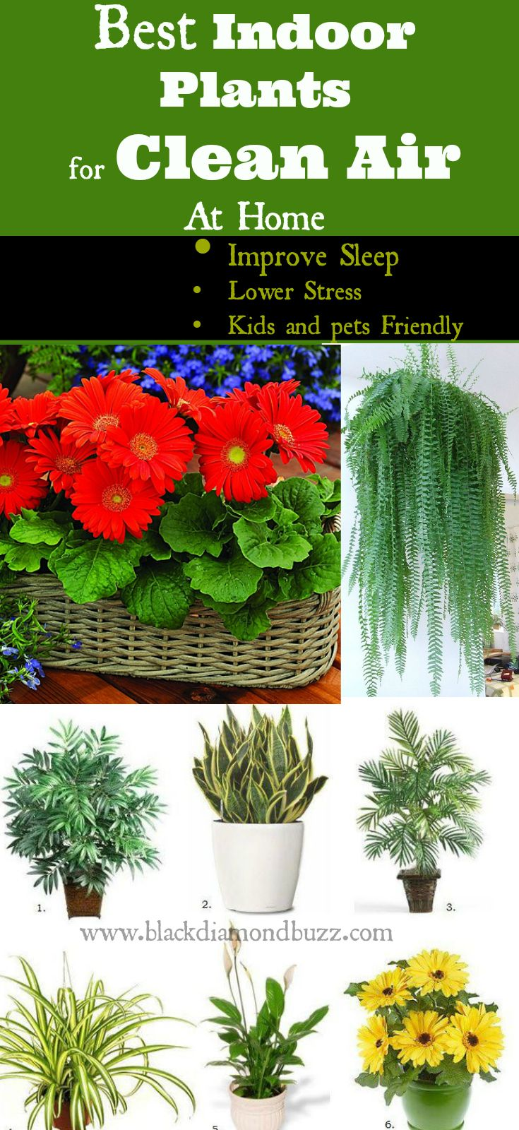 7 Best Air Cleaning Plants For Home Garden Indoor Air Purification Air Cleaning Plants Plants Best Indoor Plants