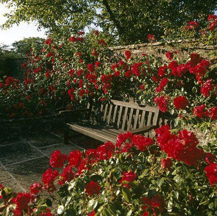 Good Image Result For Red Rose Gardens