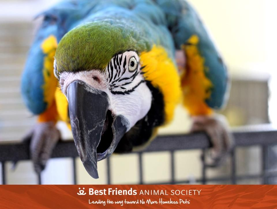 Adopt From Our Sanctuary With Images Pet Birds Animals Animal Sanctuary