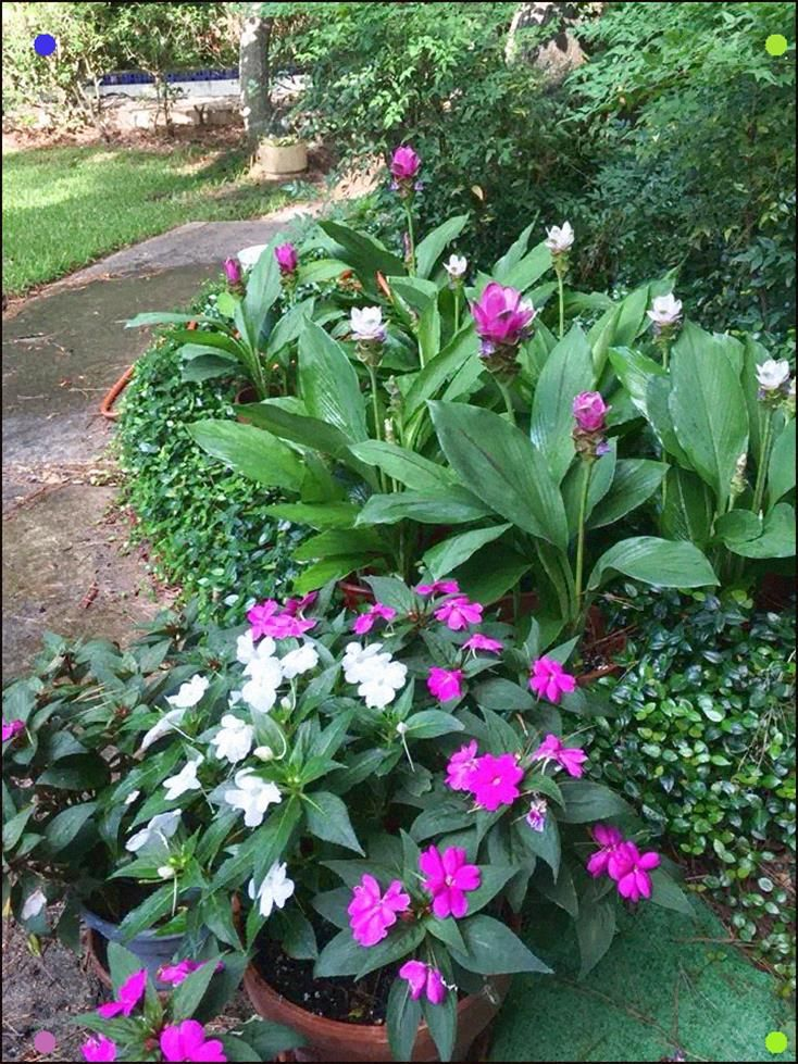 Add Sunpatiens In A Multitude Of Colors To Bring Your