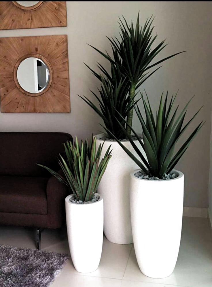 Pin De Martina Casas Berge Em цветы Em 2020 Decoração Plantas No Quarto Decoração Com Vasos De Plantas