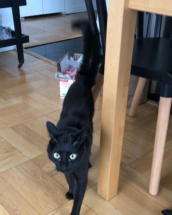 #fearmehuman #gottagetthosebirds 🐾🐾 🐾🐾 #catsofinstagram #blackcatsofinstagram #blackcats #blackcatsrule #blackcatsmatter #cats_of_instagram #cat_delight #catlovers #catsoftheinternet #catsofworld #catsoftoday #catloversclub #blackcatlove #ilovecats #adoptdontshop #bestcatsclub #ig_world_cats #cats_ig #catsofig #cat_features #kittens #meowpurrtee #cutecatslovers_only #blackcatsclub #blackcatsarethebest #buzzfeedcats #black_cat_crew #blackcat_features