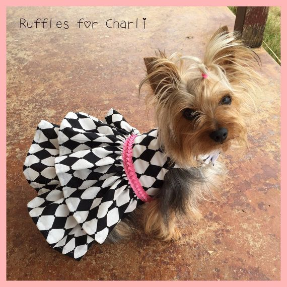 Harlequin and Pink Dog Dress Customizable to by Rufflesforcharli