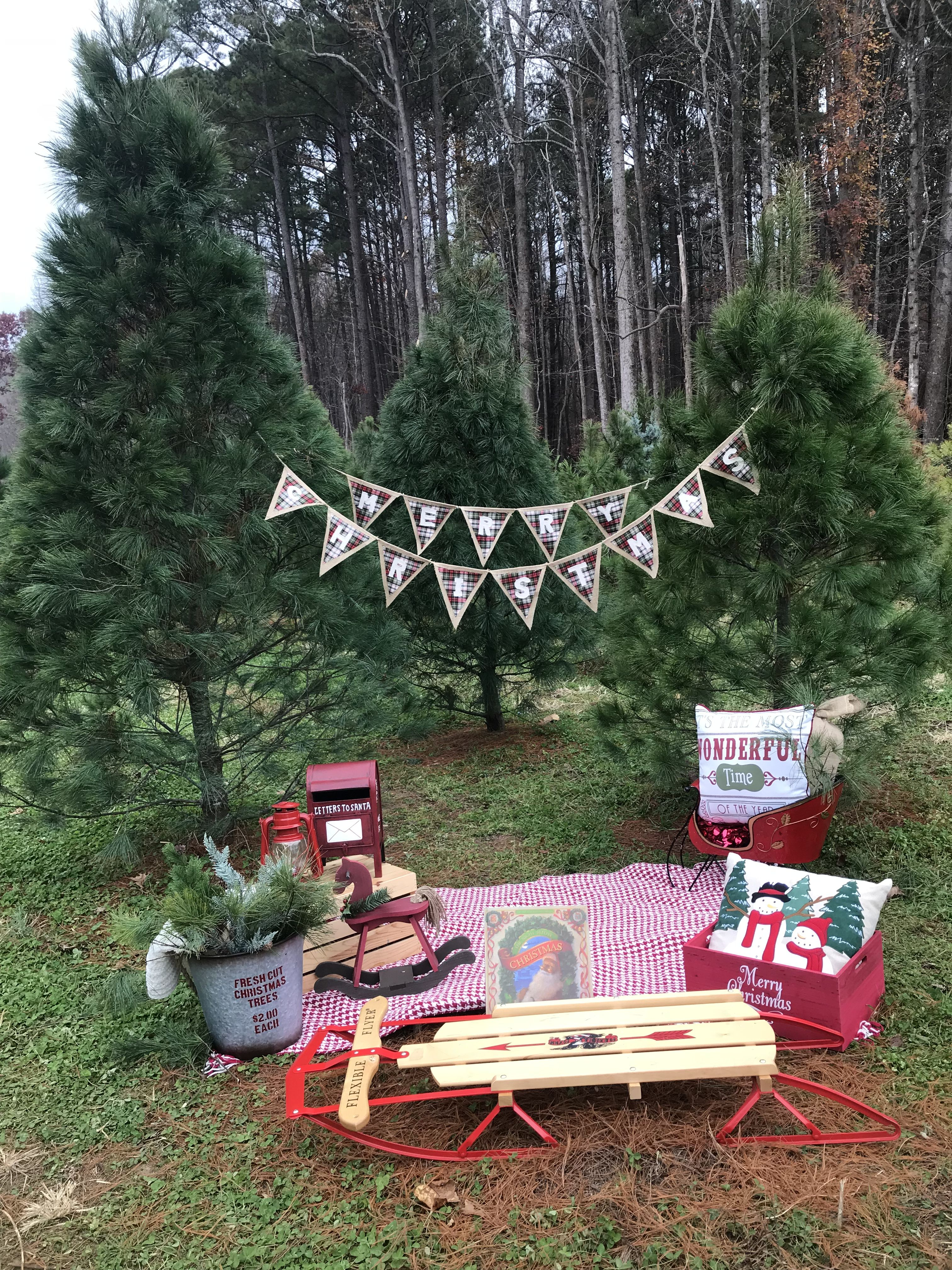 Pin By Plum Tree Photography On Photo Ideas Diy Christmas Photo Christmas Backdrops Christmas Photos