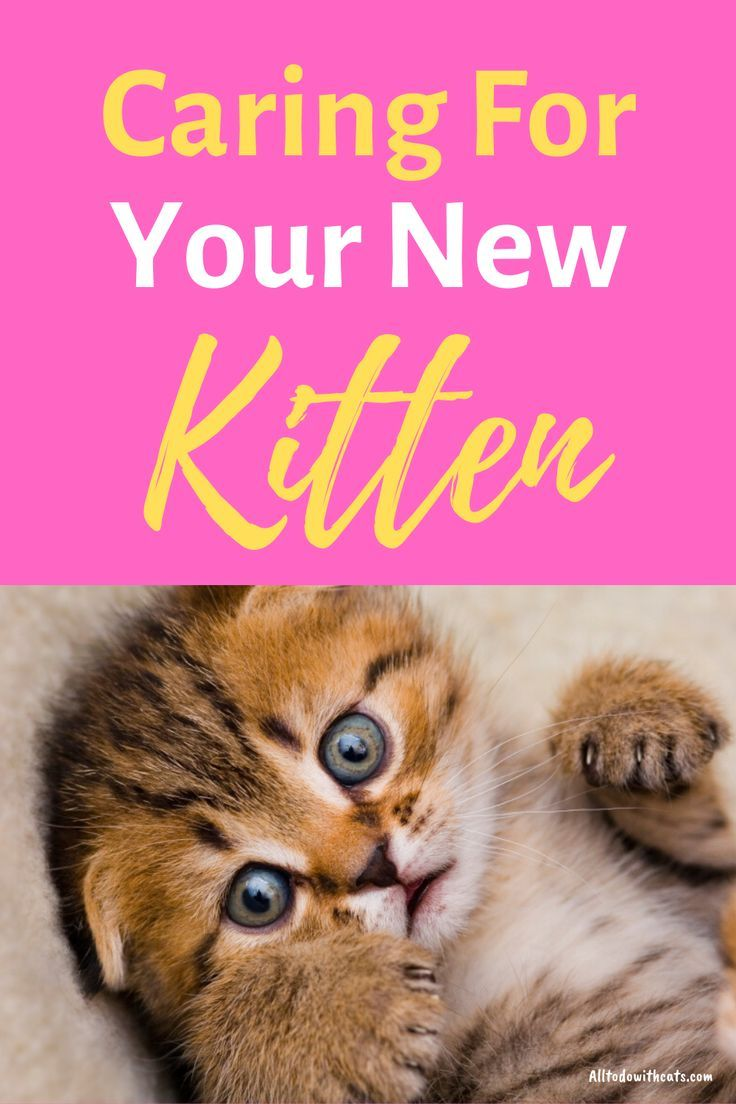 How To Care For A Kitten From Newborn Up To The First Few Months In 2020 Kitten Care Pet Care Cats Cat Care Tips