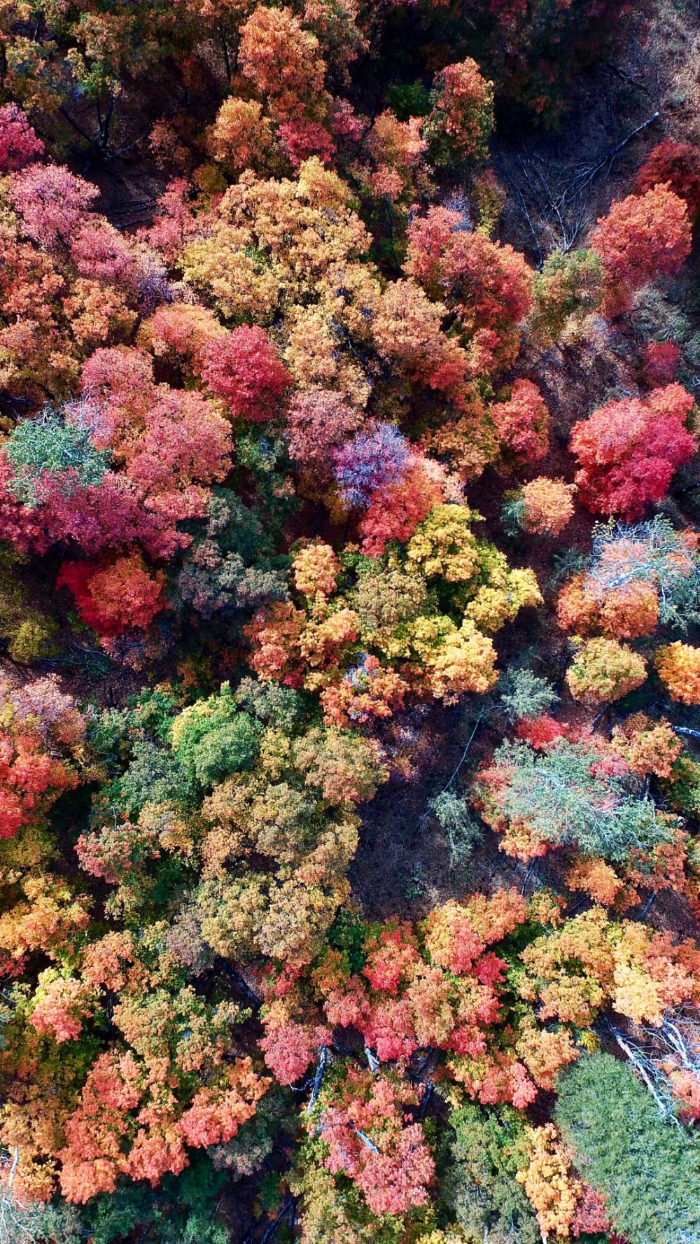Colors of Fall iPhone Wallpaper #falliphonewallpaper Forest-leaf-fall-aerial-iPhone-wallpaper #falliphonewallpaper Colors of Fall iPhone Wallpaper #falliphonewallpaper Forest-leaf-fall-aerial-iPhone-wallpaper #falliphonewallpaper