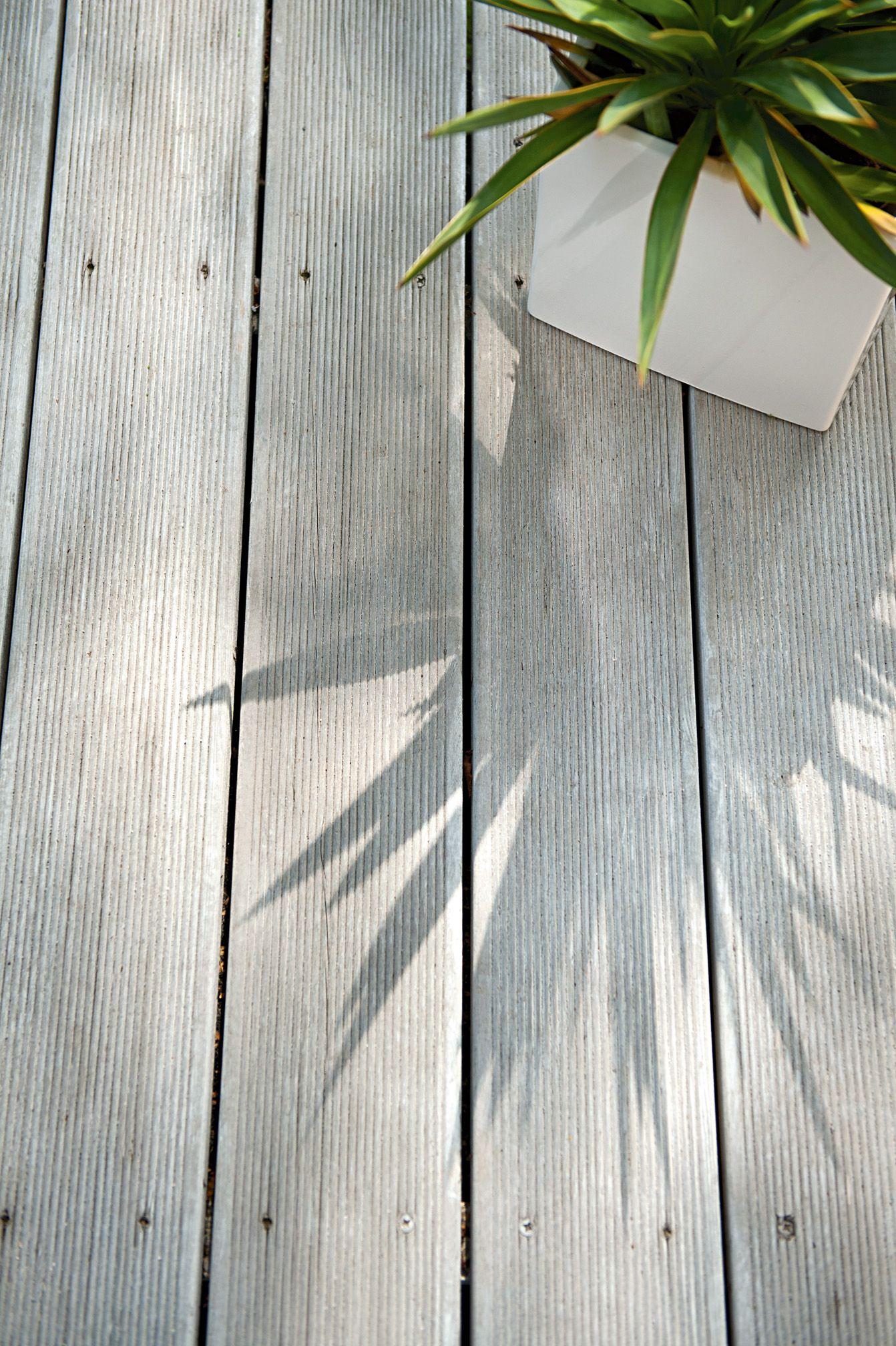Http Www Castorama Pl Katalog Ogrod 2015 Plant Leaves Plants Photography