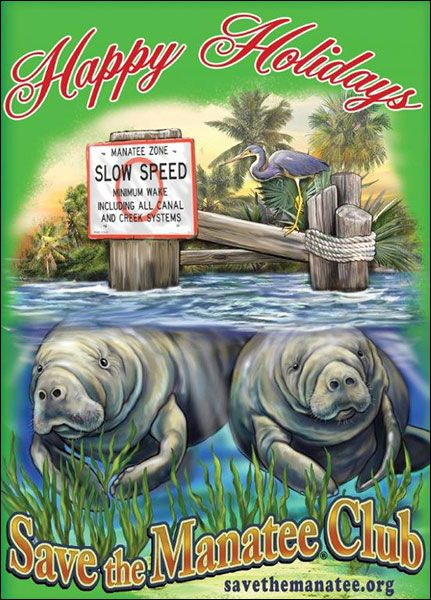 Slow Speed Holiday Card The Manatee Store Save The