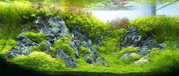 Takashi Amano Extreme Aquariums: The First Five Places On This List Must Go  To Takashi Amano. He Is A Photographer, Designer And A Pioneer In  Aquascaping.