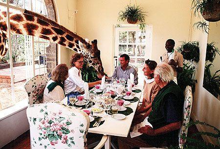 Africa Giraffe Manor I Must Go There Giraffe Hotel Giraffe Africa Travel