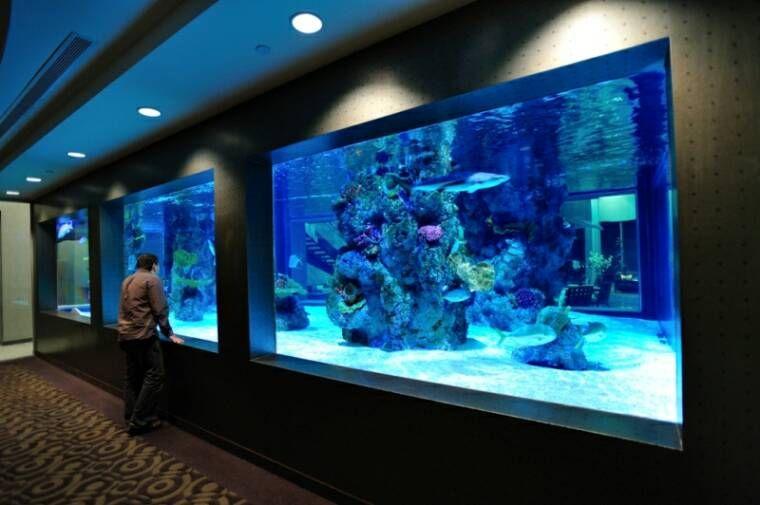 Home shark tank aquarium acrylic aquariums panels for Home fish tanks