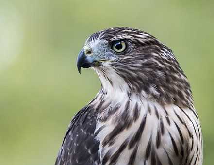 17 Popular Types Of Largest Eagles Species In The World Pinterest