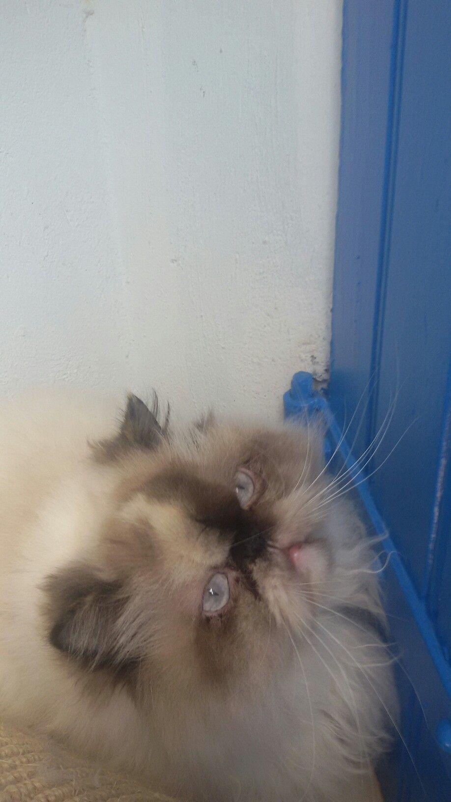 Épinglé par GERI OAKLEY sur CATS THE LOVE OF MY LIFE! Chat