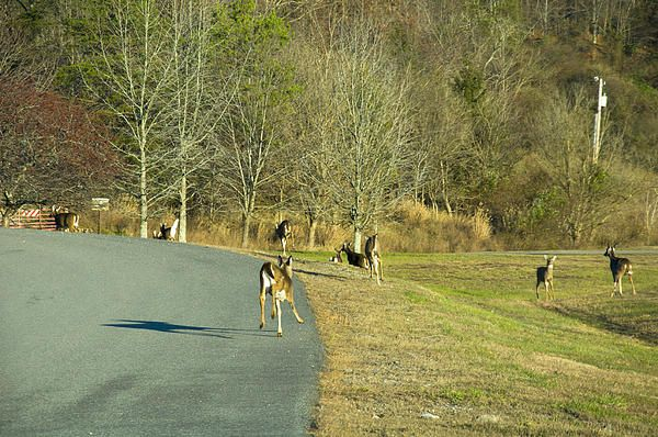 Does And Fawns On The Run