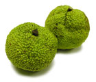 Photo of Facts and Myths of Hedge Apples