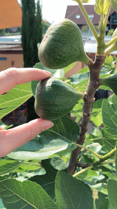 Pull fig trees and multiply  that39s how it works  Pull fig trees and multiply  thats how it works