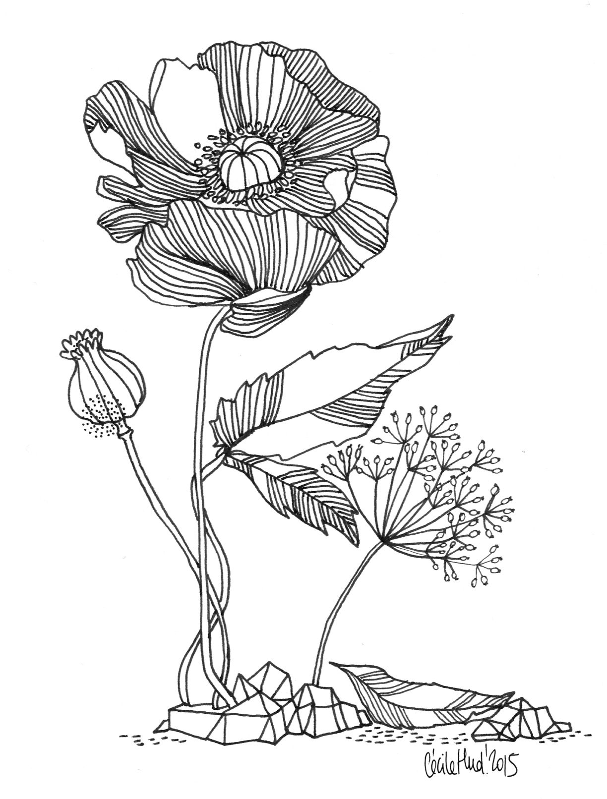 Line Art Resolution : Inflorescences cécile hudrisier dessin collage photo